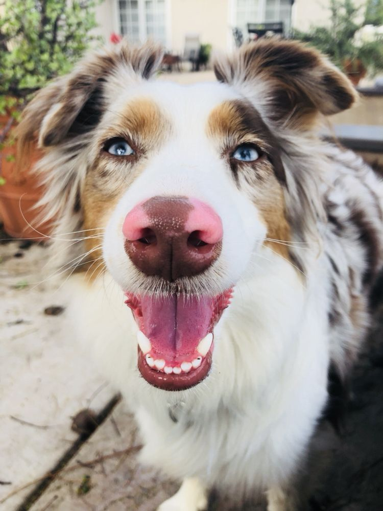 Besties Doggy Daycare and Boarding: 447 Calle Arroyo, Thousand Oaks, CA