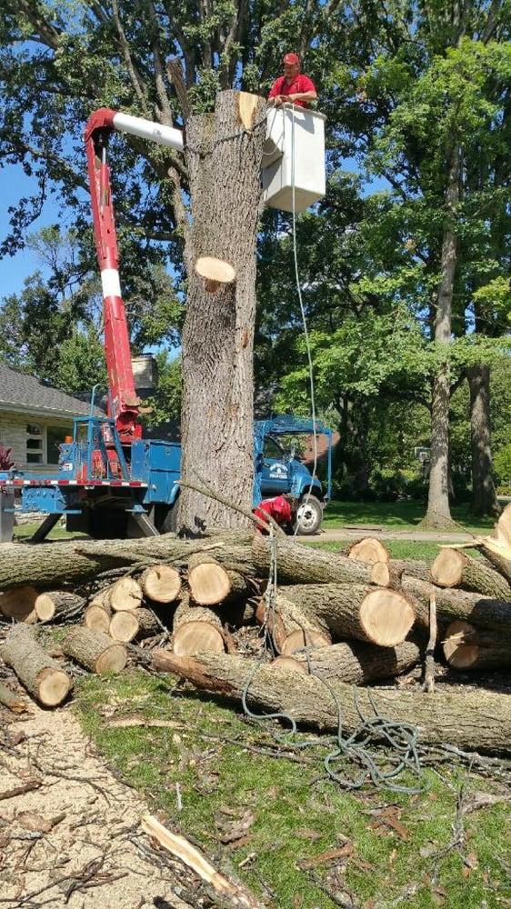 Meca Tree Service