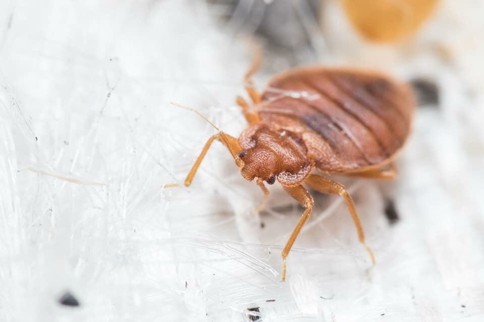 bed bugs pest control mission - 960×640