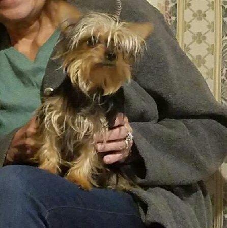 Buddha Dog Rescue & Recovery: New York, NY