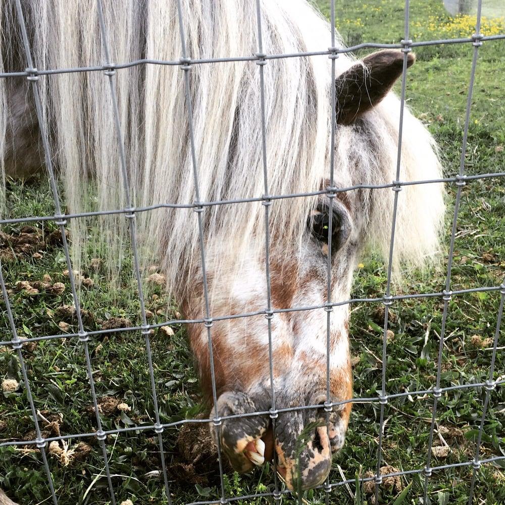 Mountain Horse Farm: 7520 W Hollow Rd, Naples, NY
