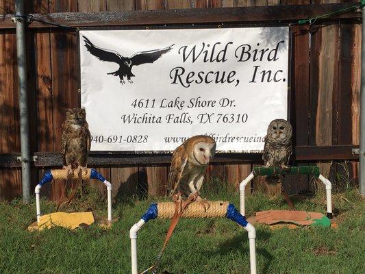 Wild Bird Rescue 4611 Lake Shore Dr Wichita Falls, TX