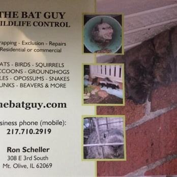 Best Of Bats In Basement How to Get Rid