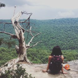 Photo of Savage Gulf Natural Area - Beersheba Springs TN United States. One & Savage Gulf Natural Area - 18 Photos - Hiking - 1183 Stone Door Rd ...