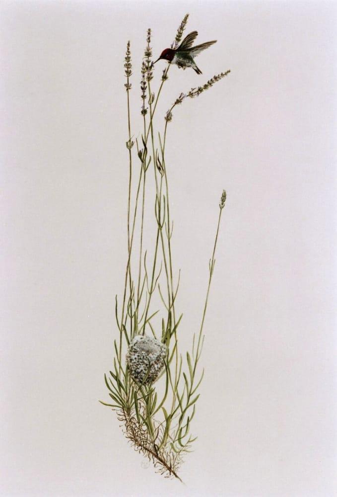 Bonny Doon Farm English Lavender: 600 Martin Rd, Santa Cruz, CA