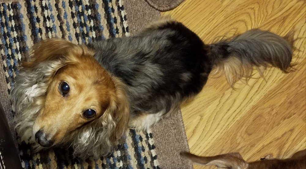 Soggy Dog Pet Grooming Spaw: 1945 W County Rd 419, Oviedo, FL