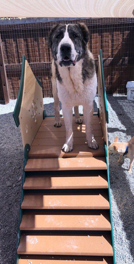 The Dog House: 229 Continental Ct, Breckenridge, CO