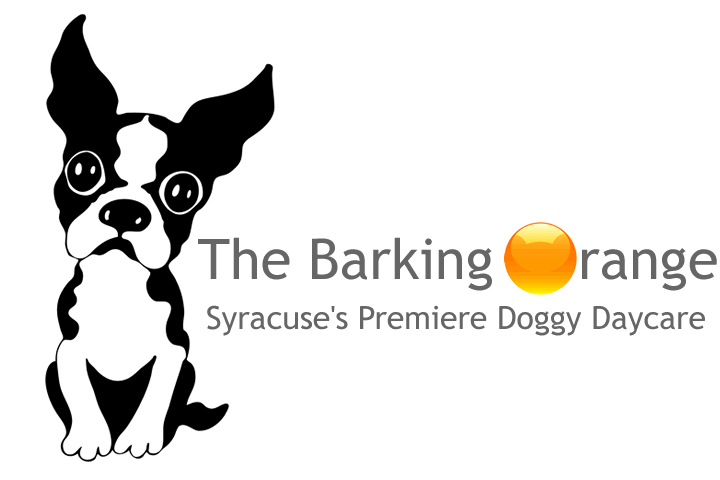The Barking Orange: 1005 N Geddes St, Syracuse, NY