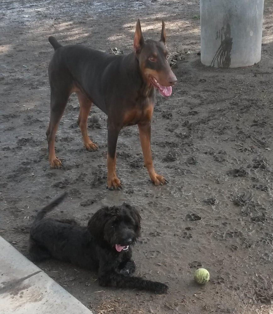 Dog Parks Near Corona Ca