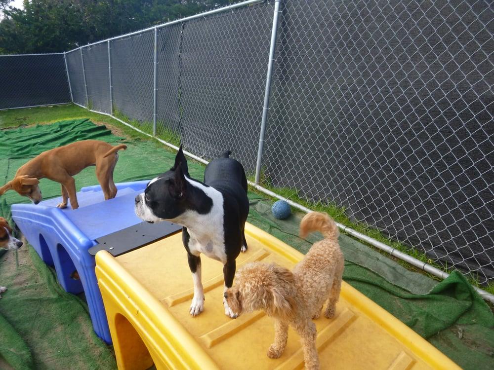Dog Day Care Near Media Pa
