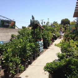 Photo Of Armstrong Garden Centers   Westchester, CA, United States. We Like  Our