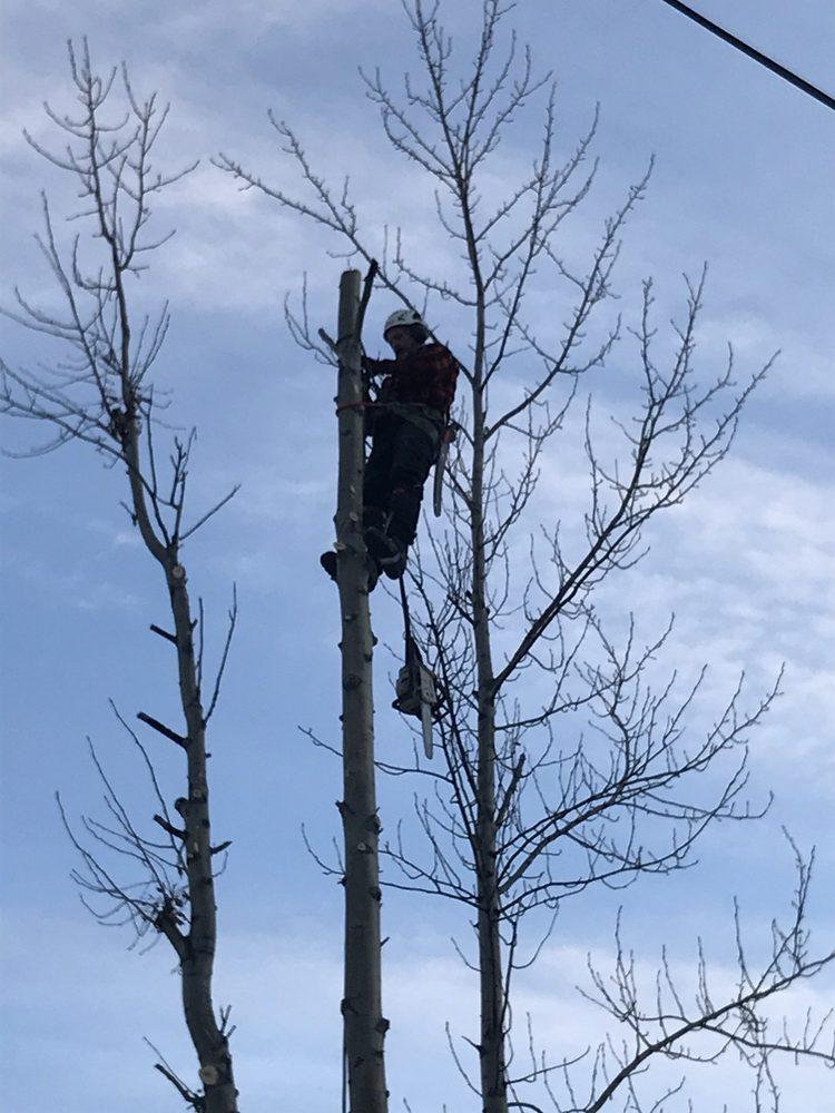 Timber Tree Service: Willow, AK