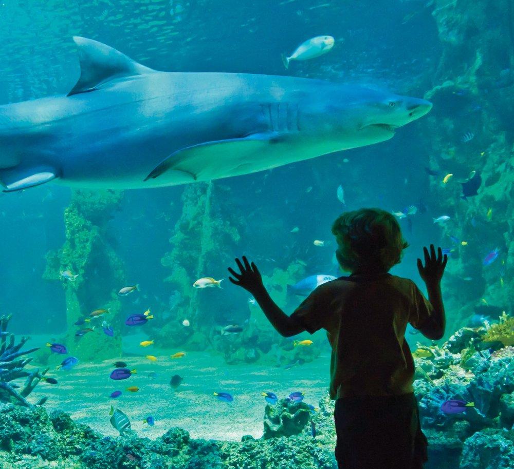 Texas State Aquarium - 520 Photos & 228 Reviews ...