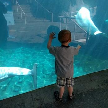 Mystic Aquarium 416 Photos 280 Reviews Aquariums