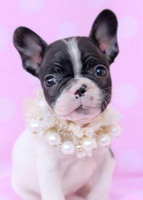 Teacups, Puppies & Boutique 5195 University Dr Davie, FL Shoe Stores ...