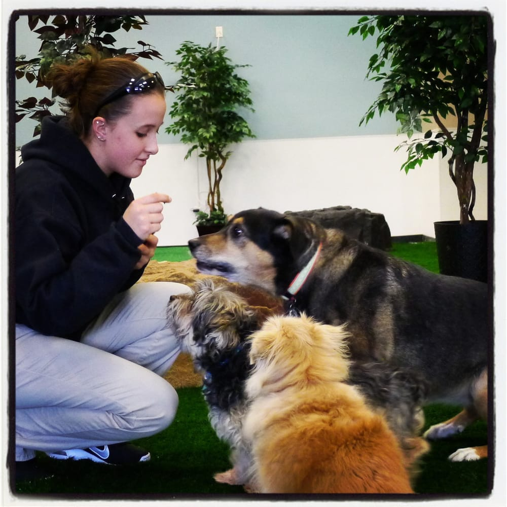 Come play in our climate controlled indoor dog park for Dog boarding places near me