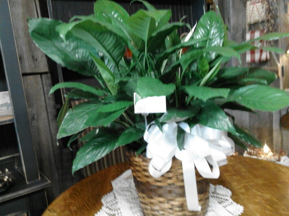 Archer's Flowers & Gifts: 420 Cumberland St, Caldwell, OH