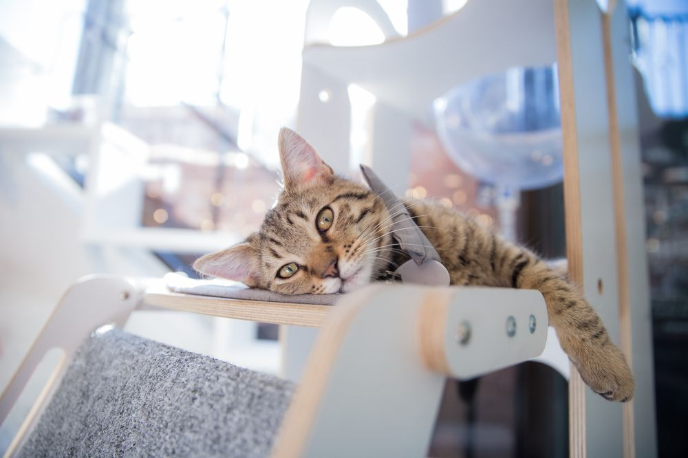 Crumbs & Whiskers: The Kitten Lounge