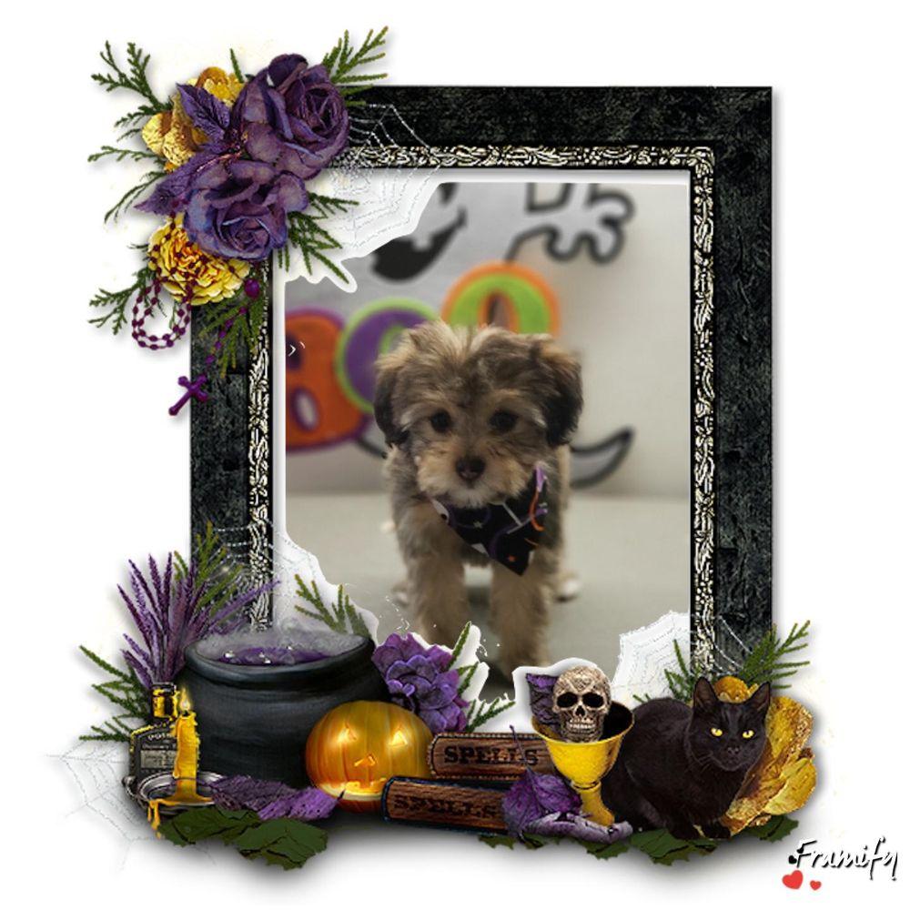 Rub-A-Dub doggie spaw mobile dog grooming: 26 NE Tandem Way, Hillsboro, OR