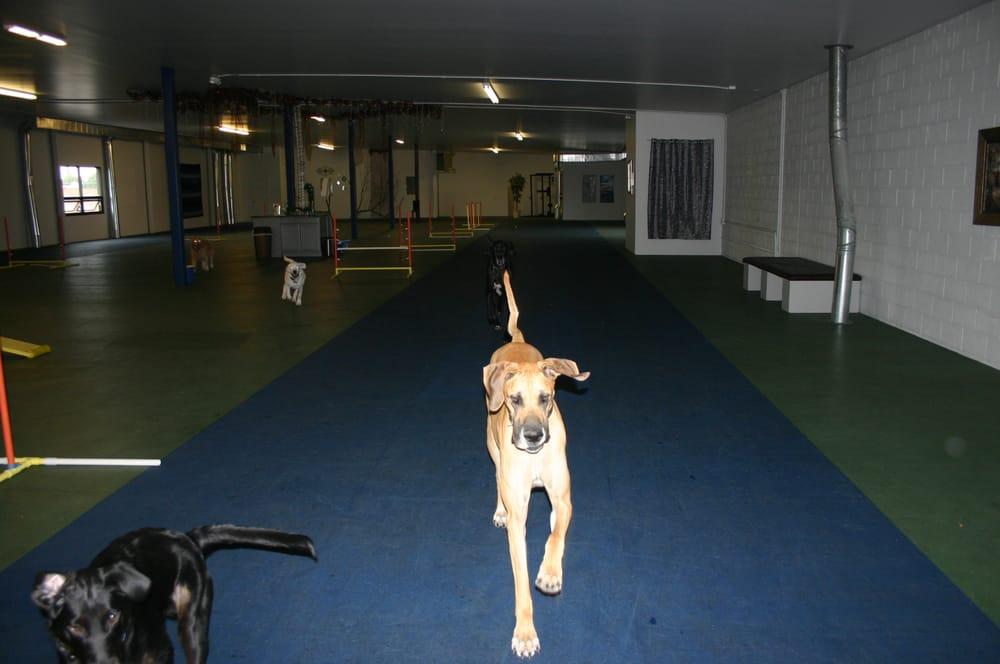 The Dog Club: 111 W Idaho St, Kalispell, MT