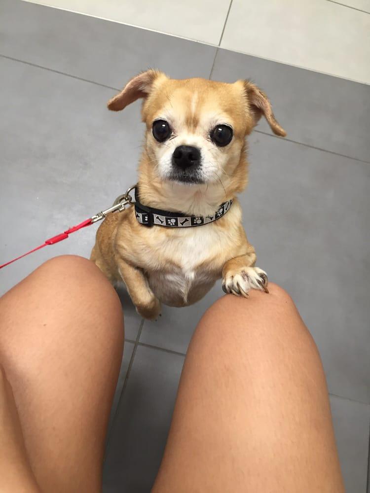 Cy Fair Animal Hospital 26 Reviews Pet Boarding Pet