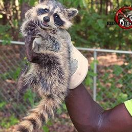 Photo Of Rid A Critter Atlanta Ga United States Ridacritter