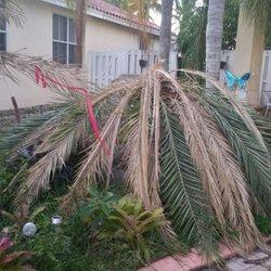Photo Of Diaz Nursery Miami Fl United States