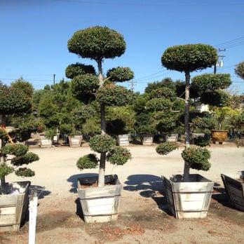 Photo Of Mimosa Nursery Anaheim Ca United States