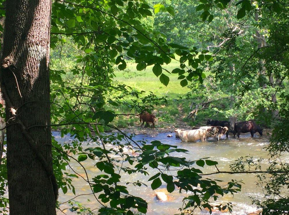 Virginia Creeper Trail: Abingdon, VA