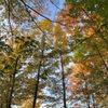 Wildwood Rush Canopy Tours: 02575 Boyne City Rd, Boyne City, MI