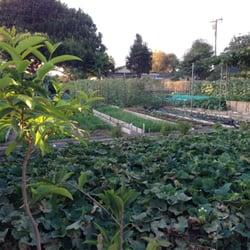 Vegetable Garden Fruits Veggies 12343 213th St