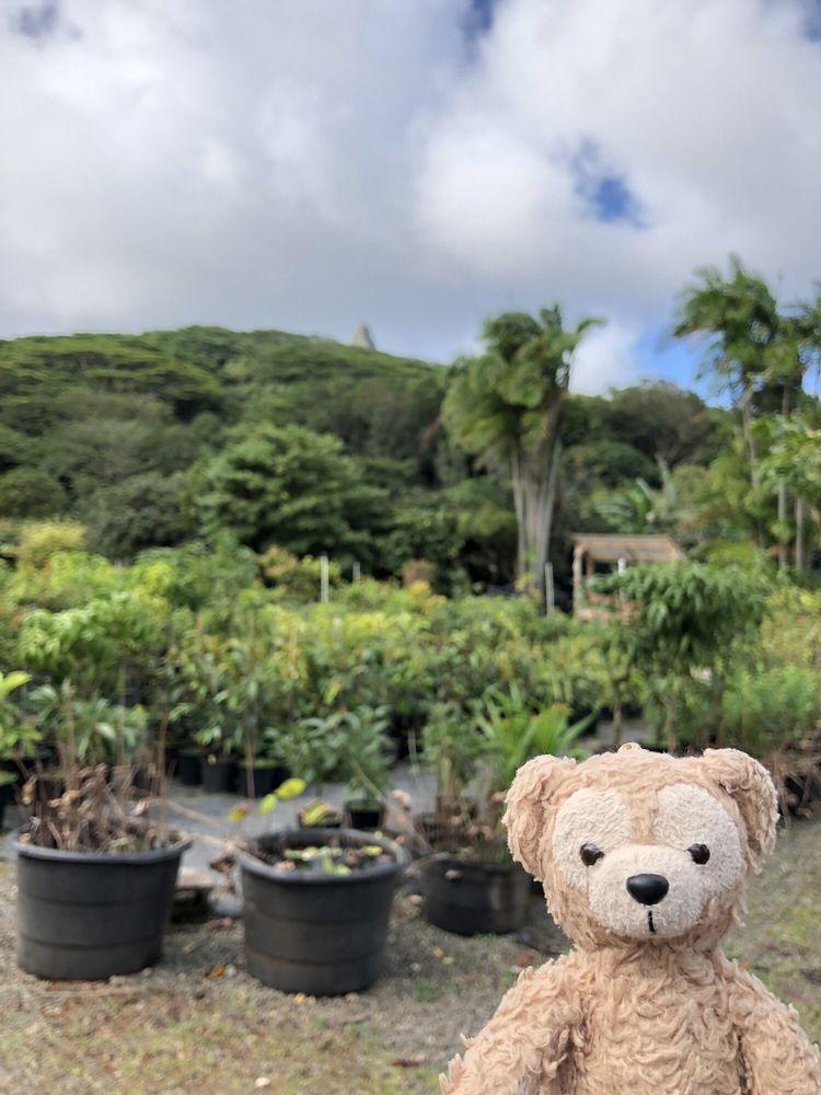 Frankie's Nursery Tropical Fruit Trees Specialist