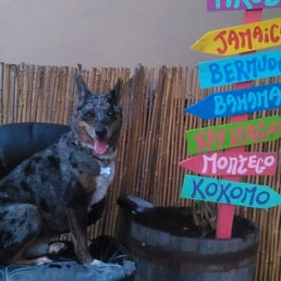 Photos for the salty dog do it yourself pet wash groom yelp photo of the salty dog do it yourself pet wash groom st solutioingenieria Images