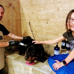 Best Self Service Dog Wash In Oceanside Ca Last Updated January