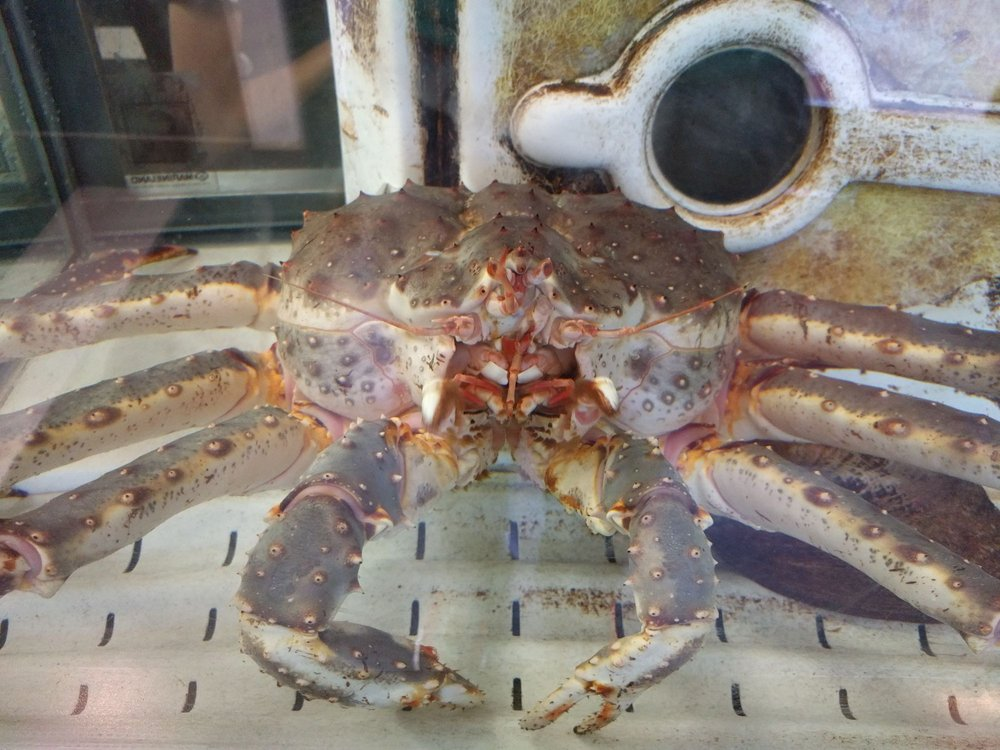 King Crab at the restaurant front - Yelp