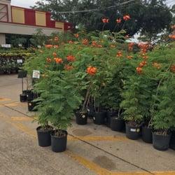 Houston garden centers 18 photos 13 reviews landscaping 3600 e sam houston pkwy s Houston garden centers houston tx
