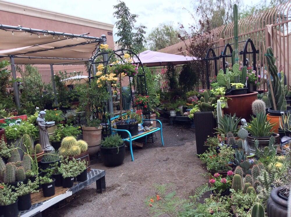Desert foothills Ace Garden center Yelp