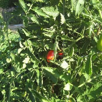 The Almost Eden Garden Project - Local Services - 701 E Meadow Dr ...