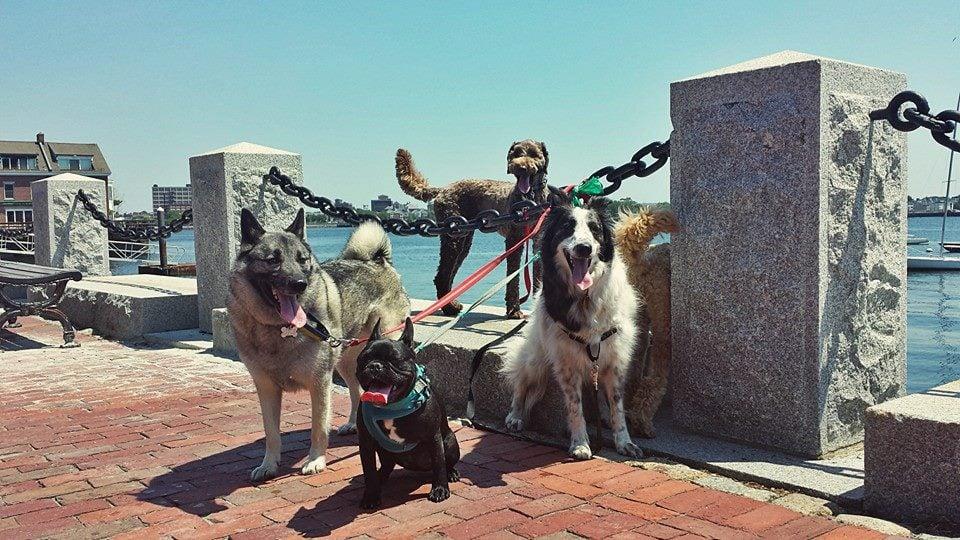 The Fetching Hound: Boston, MA
