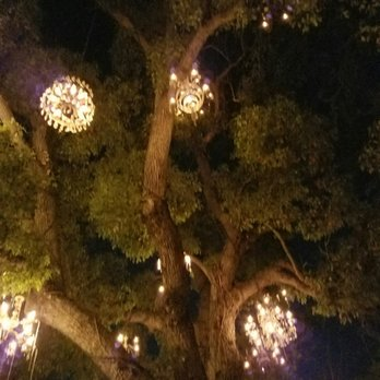 Chandelier Tree - 517 Photos & 165 Reviews - Local Flavour - 2811 ...