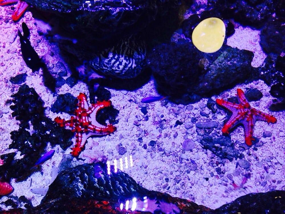Sea Life Grapevine Aquarium 192 Photos 119 Reviews Aquariums 3000 Grapevine Mills Pkwy