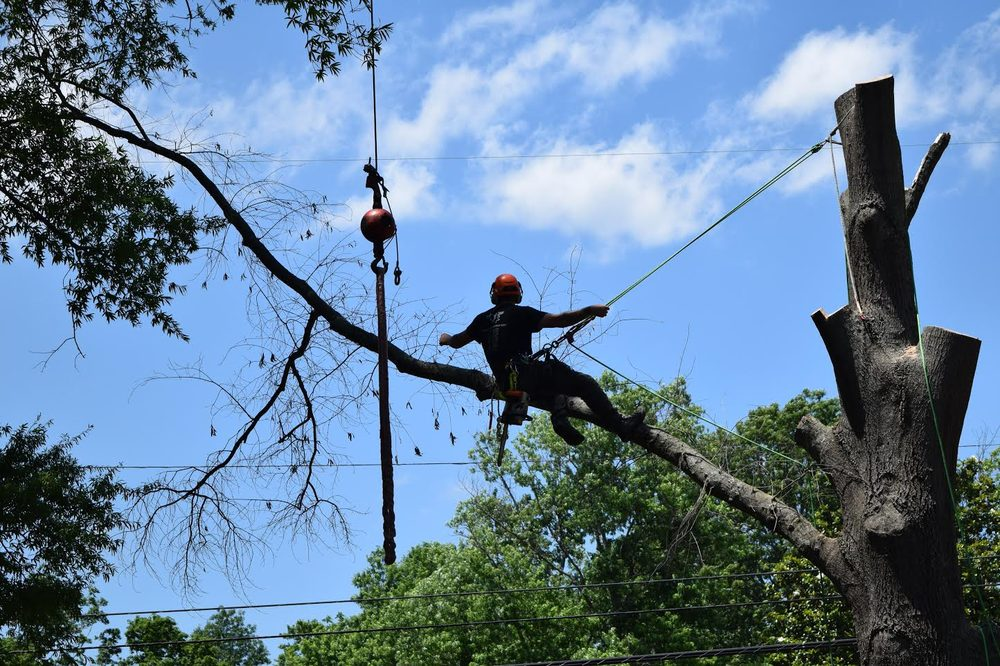 Arbor Barber Tree Specialist: Hendersonville, TN