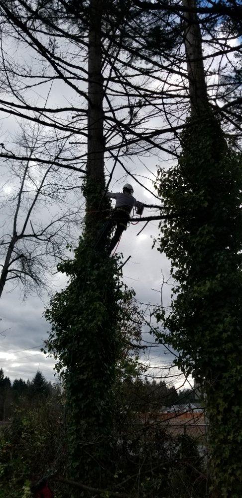Competition Tree Service: Bucoda, WA