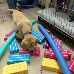 Sirius Puppy Dog Training 13 Photos Pet Training 1 Light Sky