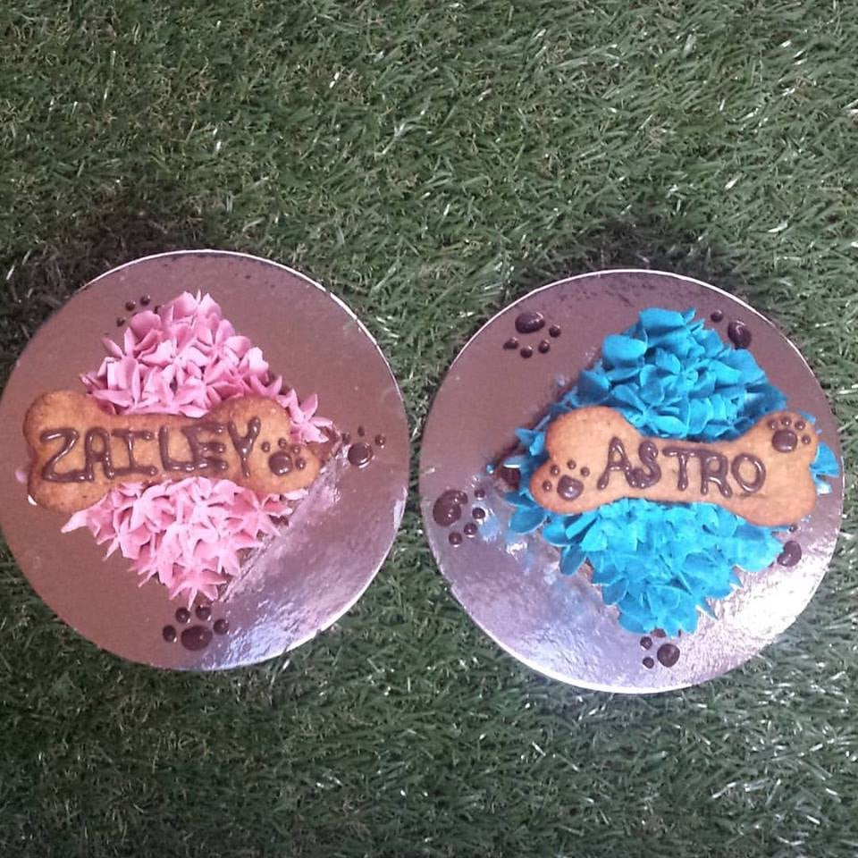 Mini Square Dog Birthday Cakes The Melbourne Pawtisserie Dog