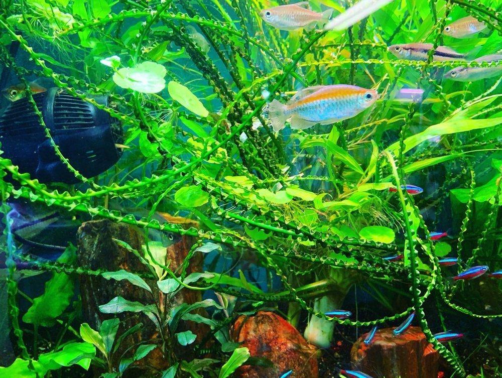 Fish Heads Aquatics
