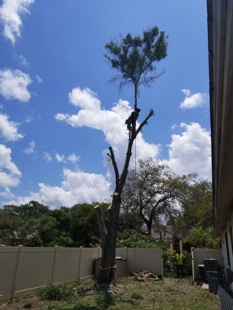 Greater Bay Area Tree & Bobcat Services: 10841 61st Ave N, Seminole, FL