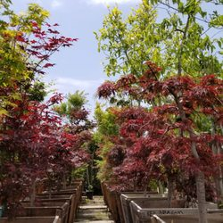 High Quality Photo Of Moneta Nursery   Gardena, CA, United States