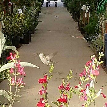 Photo Of Star Nursery North Las Vegas Nv United States Hummingbird Specialist
