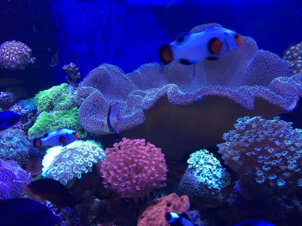 Pets aquatic reef saltwater fish cichlids and fresh water for Salt water fish pets